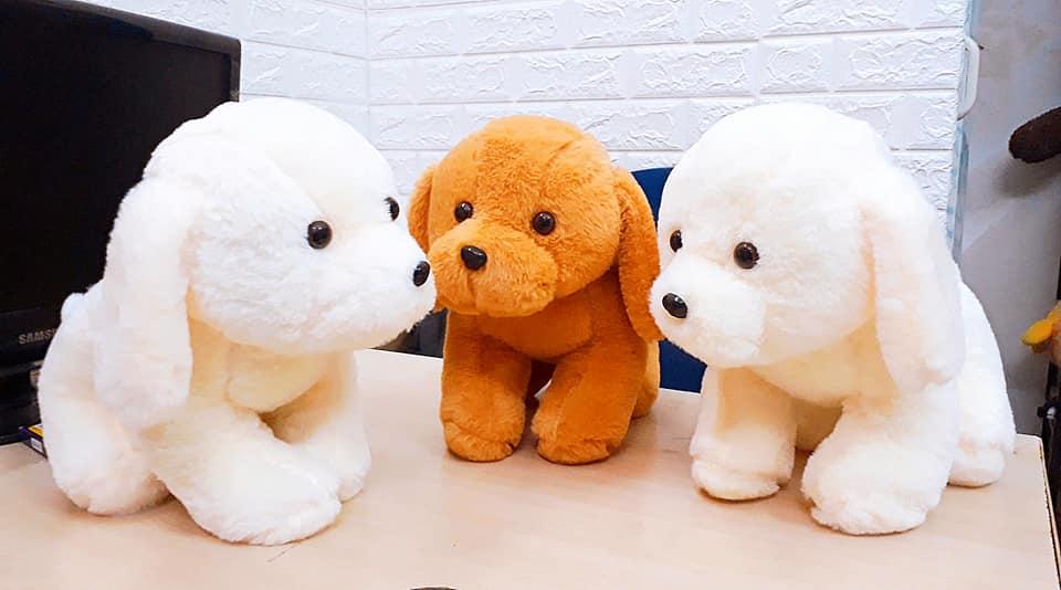 Cún bông có 2 màu vàng và trắng