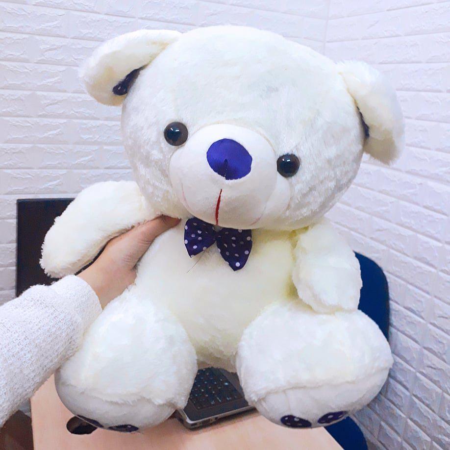 gấu bông teddy size 50cm